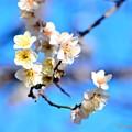 Photos: 春の香り