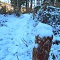 Photos: 雪の小径