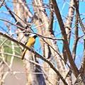 写真: 鳥の気持ち