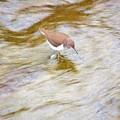Photos: 川面の流れ