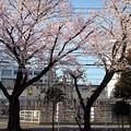 線路際の春