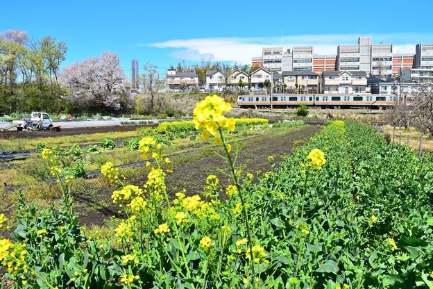 菜の花中央線
