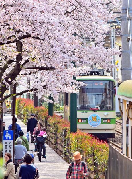 桜の街路地