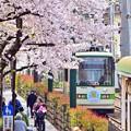 Photos: 桜の街路地