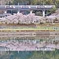 春の河川敷