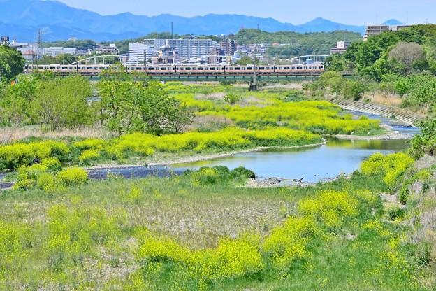Photos: 新緑色の河川敷