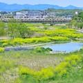 新緑色の河川敷