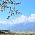 高原列車春を行く