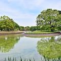 Photos: 新緑の公園