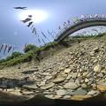 Photos: パノラマ鯉のぼり