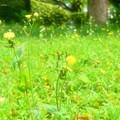 公園の草花