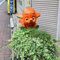 Photos: サトちゃん