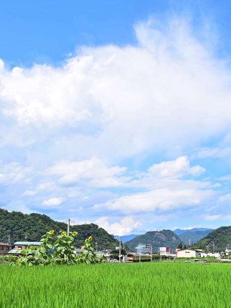 Photos: 夏色沿線(1)