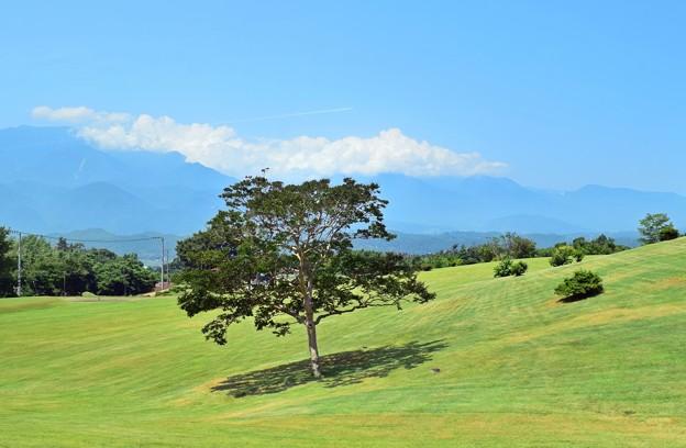Photos: 常夏色の高原
