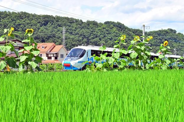 Photos: 夏色沿線(7)