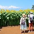 Photos: ひまわり日和
