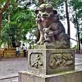 Photos: 微笑む狛犬