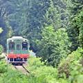 Photos: Lush greenery