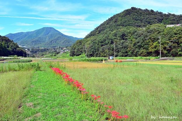 Photos: 初秋のあぜ道