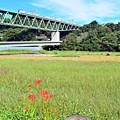Photos: 秋色沿線(44)
