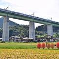 Photos: 秋色沿線(45)