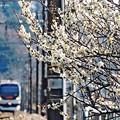 Photos: 或る春の裏高尾