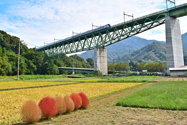 Photos: 秋色沿線(47)