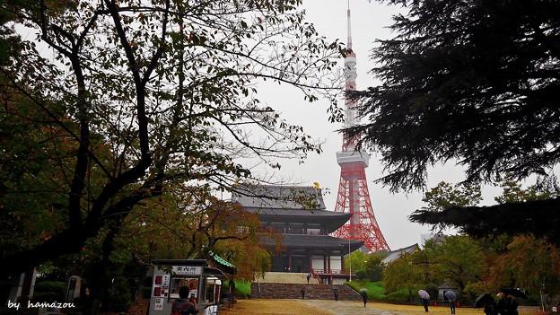 秋雨増上寺