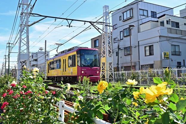Photos: 秋色沿線(48)