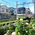 Photos: 秋色沿線(49)