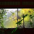 Photos: 窓明り