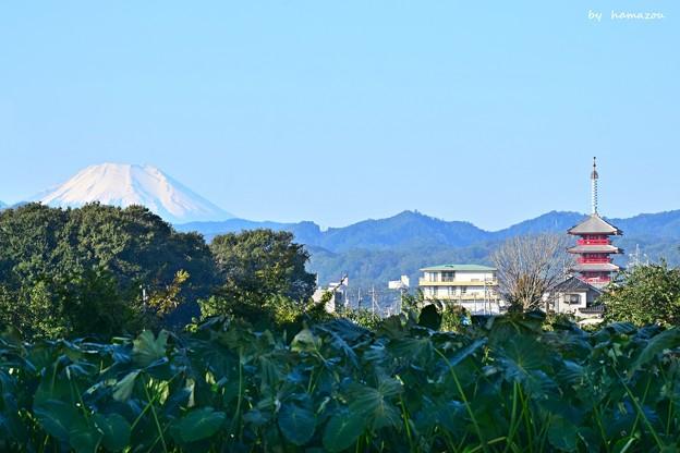 富士と五重塔