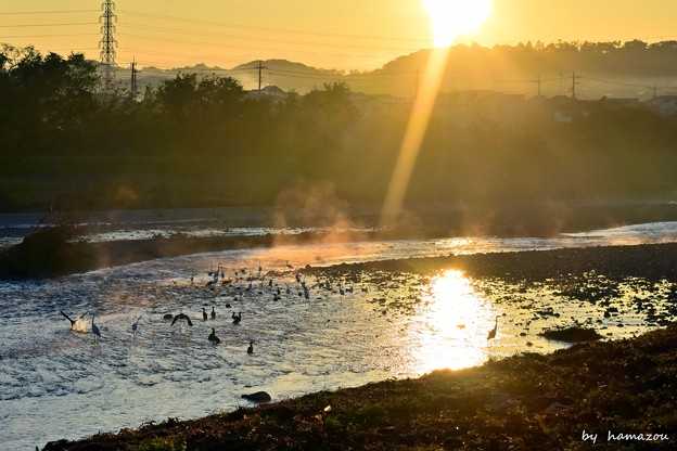 Photos: 朝陽の河川敷