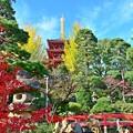 Photos: 紅葉&黄葉