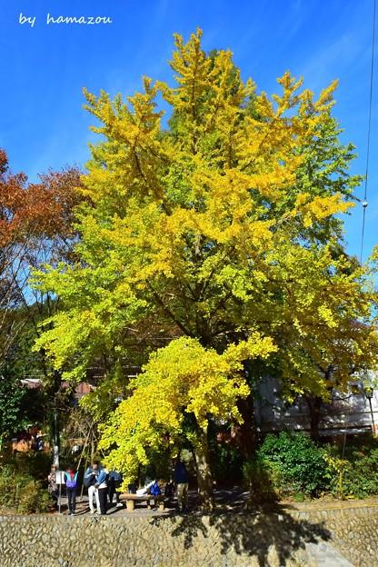 高尾山の黄葉