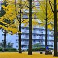 Photos: 秋色沿線(51)