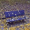 雨上がりのベンチ