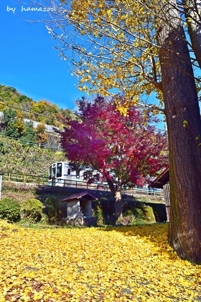 Photos: 秋色沿線(57)
