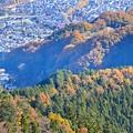 Photos: 高尾とイチョウ並木