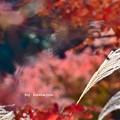 Photos: 晩秋を偲ぶ