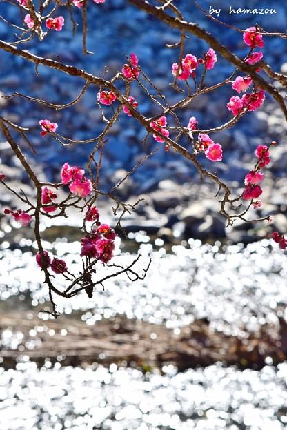 きらきら早春
