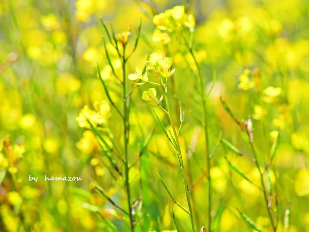 早春の彩り