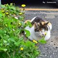 Photos: 眠り猫=^_^=