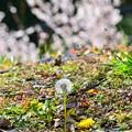 Photos: 春色彩々