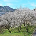 Photos: 春色沿線(20)