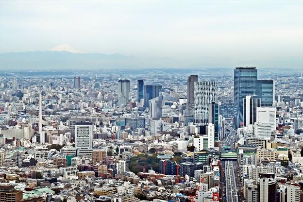 Tokyo city view(3)