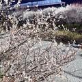 春色沿線(21)
