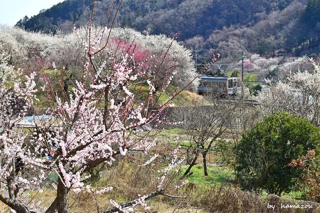 春色沿線(24)