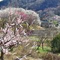 Photos: 春色沿線(24)