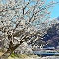 Photos: 春色沿線(25)